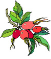 rosehips-small